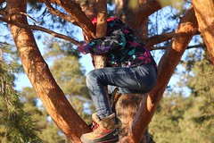 Training for the summer days (jtunkelo) Tags: trees sunlight beach pine kids finland fun outdoors helsinki climbing pinetrees 2016 mnty kallahti kallvik