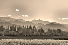 Trees for the Earth   Happy Earth Day (pallab seth) Tags: city travel panorama india mountain tourism nature sepia landscape asia tour valley layers leh himalayas thikse earthday highaltitude thiksey jammuandkashmir indusvalley thikseygompa