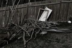 A dog and his sticks (David Surette) Tags: bw dog white black me weird sticks
