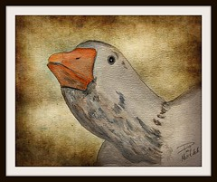 The Swan watercolor (patrick.verstappen) Tags: park art texture animal watercolor painting photo yahoo google flickr image painted pat textured facebook picassa sinttruiden paintng twitter gingelom ipernity pinterest ipiccy picmonkey