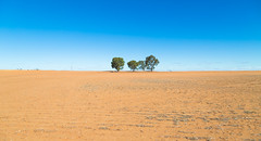 018A0391.jpg (Fletcher Woolard) Tags: color dry victoria deadtrees