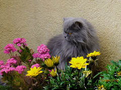 El Peque, jardiner ..... (T.B.O.) Tags: peque nit jard gats