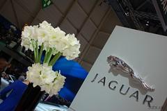 DSC_0374 (Pn Marek - 583.sk) Tags: show foto motor jaguar etype xj bertone xk genve 2011 b99 autosaln eneva fotogalria