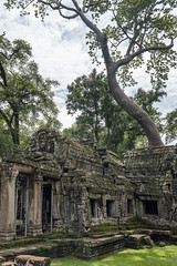 Outside the West Gate of Ta Prohm (tmeallen) Tags: west abandoned gate cambodia siemreap taprohm angkorthom 12thcentury encroaching hugetree ancienttemple khmerempire tetramelesnudiflora sprungtree