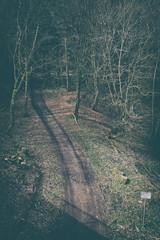 German Wald (Al Fed) Tags: street wood light early spring stuttgart path wald mythology waldweg 7mhlen 20160403