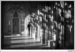 Domtuin Utrecht. (Digifred. Thx for > 3 000 000 views.) Tags: street city light shadow blackandwhite holland netherlands blackwhite utrecht nederland streetphotography canals grachten straat 2016 domtuin digifred pentaxk3