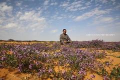 Spring Saudi Arabia -   (Bader Se7an) Tags: spring