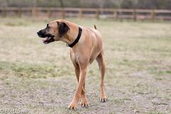 Keswick (brettswift) Tags: dog calgary enzo