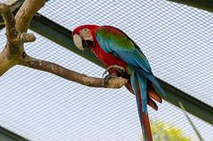 Temaiken Biopark (diegocamara) Tags: parque nature argentina zoo monkey buenos aires natureza macaco papagaio arara tucano passaros lemure biopark gavião temaiken