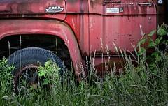 Custom Cab Ensalada (rickhanger) Tags: ford abandoned overgrown truck rust rusty chrome vehicle fordtruck abandonedtruck fordcustomcab overgrowntruck