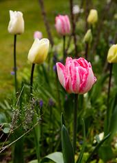20160424-5D3_9467 (Terry Payman) Tags: garden jeannette