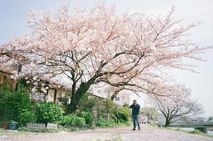 000525960036-33 (yankai chiou) Tags: tiara film japan 135 kamoriver uxi