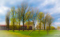 Hilfe, mein Bild ist in einen Farbtopf gefallen o.O (thrbnzzyzx) Tags: trees tree hamburg farbe bume baum neuengamme kz bergedorf effekt gedenksttte schief vcolor