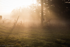 IMG_1925 (hillarycharris) Tags: morning trees mist nature fog sunrise canon landscape outdoors foggy tamron morningmist naturephotography morningfog mistymorning treesinfog foggytrees foggylandscape sunrisephotography treesinmist mistylandscape canonrebelt5 canoneost5