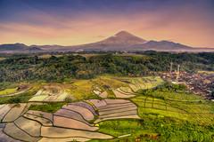Sumbing Vulcano (SadAgus) Tags: indonesia aerial ricefield sawah drone phantom3 sumbing