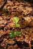 2015 June Hambacher Forst (jennifA lost) Tags: outdoor climatechange klimawandel nocoal hambacherforst endegelaende