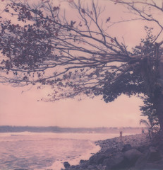 Honolii Beach (Celina Innocent) Tags: ocean film beach project sx70 hawaii pacific instant expired honolii silverframe impossibe impossibleproject