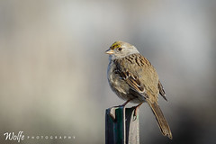 perched (Aaron_Smith_Wolfe_Photography) Tags: mountains nevada sierra carsoncity