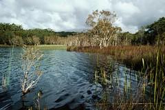 Lake Bowarrady, Great Sandy National Park, Fraser Island, Qld, September, 1991. (garratt3) Tags: lake film pentax australia qld queensland kodachrome aus fraserisland greatsandynationalpark