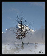 January (patrick.verstappen) Tags: winter snow cold tree photo yahoo google nikon flickr pat january facebook picassa gingelom ipernity d7100 pinterest ipiccy