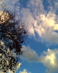 #shotonmylumia #shotonlumia #lumia735 #thelumians #sky #bluesky #clouds #sunset #sunsets #tree #trees #nature #leaves #winter #sky_brilliance #loves_skyandsunset #nature_brilliance #vivonatura #tree_brilliance #hugs_for_trees #loves_united_trees (simoneaversano) Tags: trees winter sunset sky tree nature leaves clouds sunsets bluesky instagram ifttt shotonmylumia shotonlumia lumia735 thelumians vivonatura hugsfortrees lovesskyandsunset naturebrilliance lovesunitedtrees treebrilliance skybrilliance