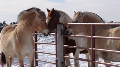 (J+L McDoelz) Tags: horse mn nonprofit 2016 therapeutic stablepathways