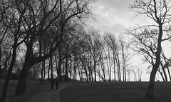 Stanley Park, Blackpool (Rhisiart Hincks) Tags: park trees england blackandwhite bw blancoynegro silhouette hiver lancashire angleterre stanleypark coed blackpool inghilterra blancinegre lloegr fylde zuhaitzak blancetnoir  duagwyn gaeaf negu ingalaterra brosaoz sirgaerhirfryn sasana cysgodlun swyddcaerhirfryn fyldecoast czarnobiae holidayresort zuribeltz feketefehr anglie anglaterra dubhagusbn gwennhadu siyahvebeyaz  juodairbalta powsows sasainn schwarzundweis  ernabl geamhradh mustajavalkoinen  crnoibelo angletrra  ngilandi melnsunbalts silwt cyrchfangwyliau negruialb dubhagusgeal  rnoinbelo zwartenwit dubhsgeal southrheged derheged