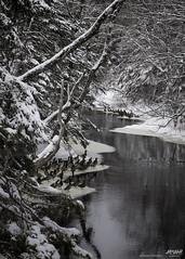 a duck hideaway on a winter brook (Rob Romard) Tags: winter snow novascotia ducks brook