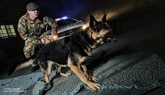 IT'S A DOG'S LIFE (Defence Images) Tags: uk dog man male animal night standing army military police canine headlights militarypolice british germanshepherd pointing alsatian defense defence movements cpl corporal shouting actions jnco personnel royalairforce mwd identifiable doghandler militaryworkingdog