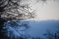 softly into Dusk (Dotsy McCurly) Tags: blue trees winter sky white nature beautiful nikon bokeh dusk nj 300mm