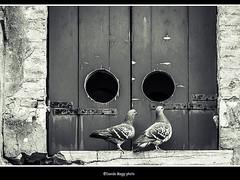 balcone matrimoniale (magicoda) Tags: venice people blackandwhite bw italy muro bird window girl wall see eyes nikon couple italia foto pigeon double bn persone finestra occhi illusion passion wife venetian fotografia dslr venezia piccione biancoenero ragazza coppia balcone uccello passione doppio veneto d300 2016 cannaregio illusione blackwhitephotos nosexy noupskirt magicoda davidemaggi maggidavide
