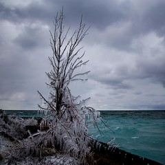 Frozen tree (Notkalvin) Tags: winter lake storm cold tree ice beach water frozen flora outdoor lakemichigan shore iced icy icecovered mikekline notkalvin notkalvinphotography