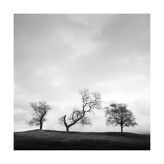 Magnetism (Nick green2012) Tags: trees winter square landscape with attitude minimalist