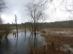 Flooded fields, Callander (luckypenguin) Tags: winter river scotland stirling perthshire callander teith easgobhain