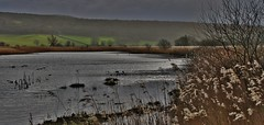 Evening storm Leighton Moss, RSPB Reserve, Lancashire, UK (BrianDerbyshire) Tags: uk reed water evening moss reserve lancashire silverdale rspb morecambebay leightonmoss mossland
