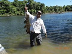 12540667_933891853367166_6361705086169661265_n (Nelson Lage - pescamazon.com.br) Tags: trip travel fish river fishing amazon bass peixe catfish xingu flyfishing casting tucunare pescaria amazonia peacockbass trombetas payara