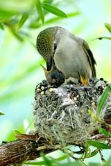 Getting bigger! (jimsc) Tags: arizona baby fauna female yard march catalina spring hummingbird desert nest pentax tucson critter wildlife ngc mother hummer sonorandesert windowshot nestling k50 pimacounty jimsc