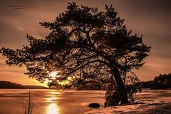 EarthBound (Fredrik Lindedal) Tags: sky sun sunlight lake snow tree ice clouds sunrise nikon earth gaia goldentime sunlightrays d7200 fredriklindedal