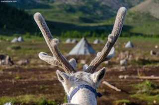 Antlers and Tepees