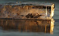 Ice on Ice (McRusty) Tags: light sunset colour reflection ice scotland highland translucent block loch ruthven invernessshire stratherrick