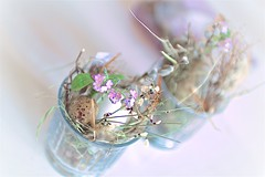 Ostern (fotoartdiary I photography) Tags: pink light sunlight green art home nature colorful soft sweet bokeh pflanze decoration smooth eggs ostern eastern pastell harmonie softtones turkis estereggs