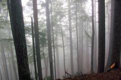 Foggy day on Mt. Walker, WA (nikname) Tags: trees mountains fog washingtonstate douglasfir stateparks foggydays washingtonnationalforest washingtonstateparks pacificnorthwestrainforest foggyforests foggymountainroads