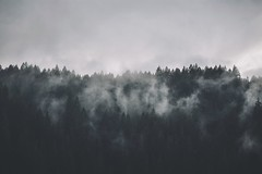 #531 (-HannahKemp) Tags: fog forest woods foggy wilderness foggyforest