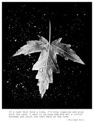 Falling Among the Stars (mseyb) Tags: stars leaf worldtradecenter 911 falling literaryreferenceinpictures phillippepetit poetographytheme169bag
