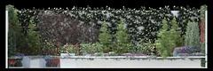 minimalist garden_frontal view 2