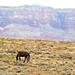 Wild Horse, Vermillion Cliffs, Navajo Nation AZ 2015