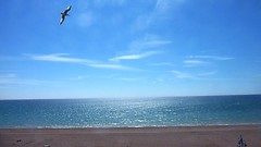Freedom (bimbler2009) Tags: ocean blue sea sky people cloud seagulls beach water landscape coast seaside outdoor shore movementmotion panasoniclumix