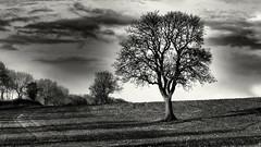 After the rain. (davepickettphotographer) Tags: uk blackandwhite landscape afternoon beds bedfordshire monotone gb swineshead davepickettphotographer