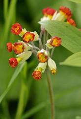 Spring 2016 - 836 LBG (Lostash) Tags: life flowers plants nature spring flora seasons leicesterbotanicalgardens