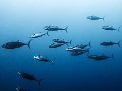 IMG_0315 (eye[4]eye) Tags: egypt diving gypten tauchen bluewaves